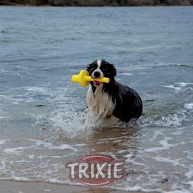 Mot-Aqua Dog Activity