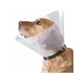Collar Isabelino Buster transparente